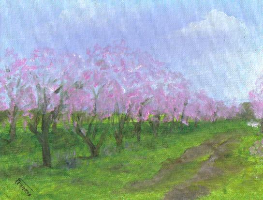 Adams Peach Orchard
