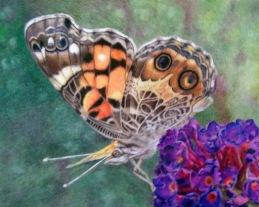 """""""Butterfly"""" WIP"""